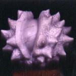 CHESTNUT, Carrara Marble - Tilmann Krumrey 1988